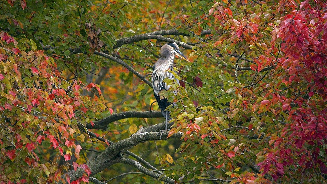 Птица в ветвях осеннего леса
