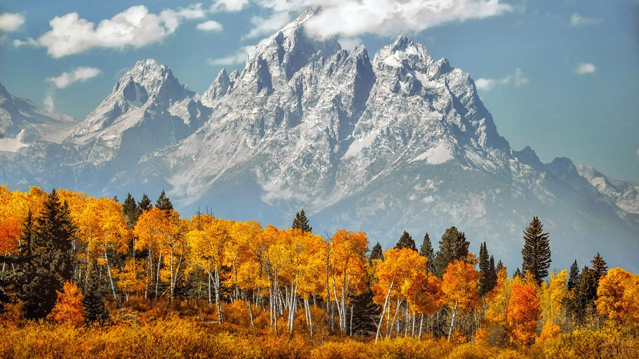 Золотые кроны берёзового леса на фоне голубых гор