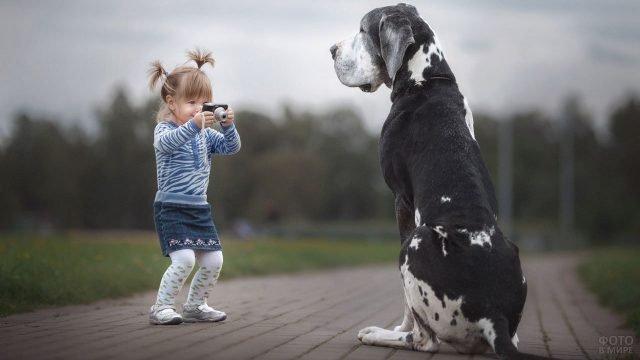 Маленькая девочка фотографирует большого пятнистого дога