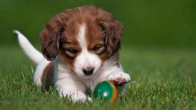 Щенок с мячом в траве