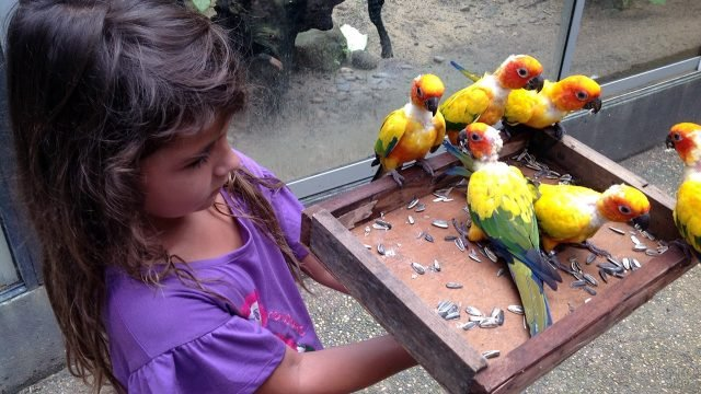 Девочка кормит птенцов попугаев в Парке Птиц на Пхукете