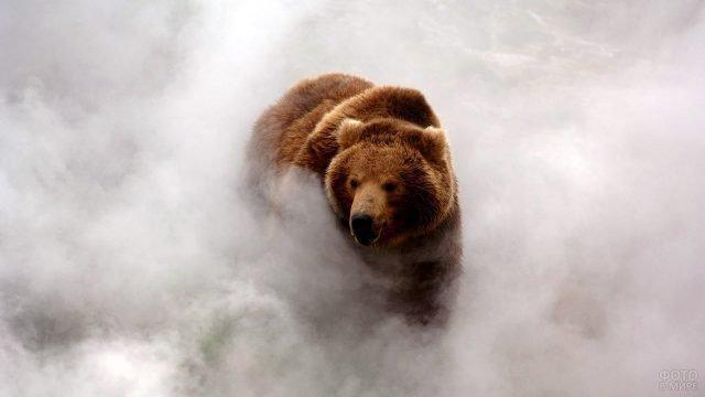 Огромный медведь выходит из тумана