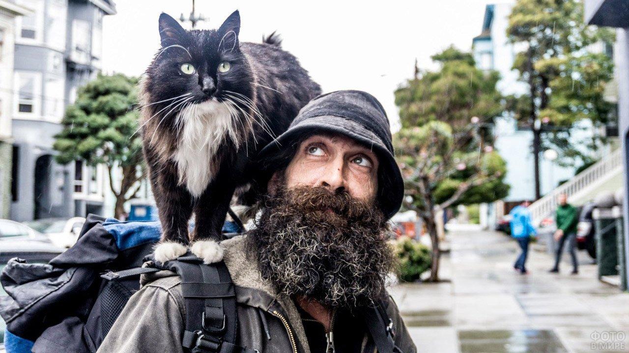 Кот на плече бородатого туриста-путешественника