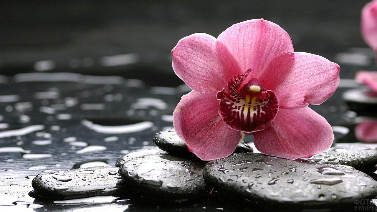 Картинки красивые на тему цветы