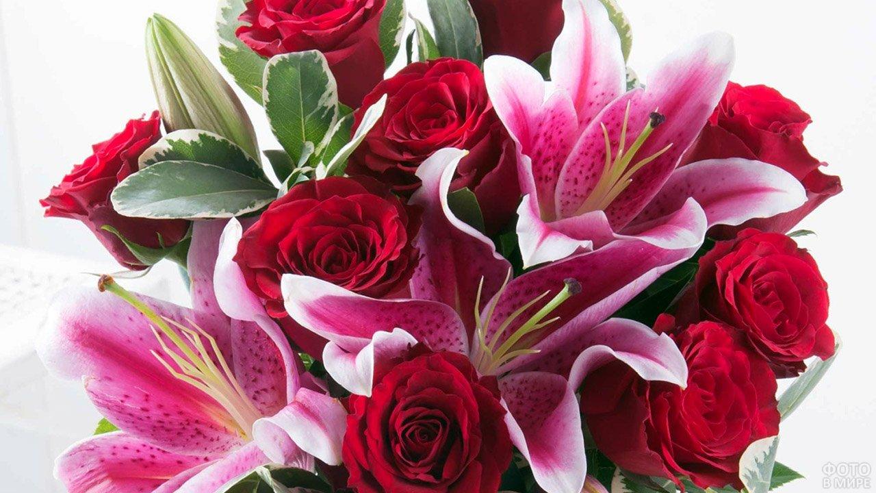 лилии картинки розовые розы нежные