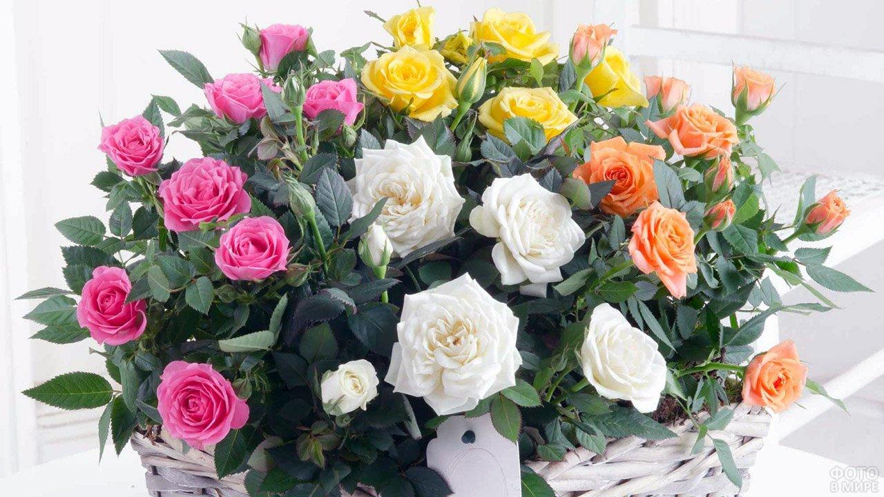 Кустовые розы разных цветов в белой корзинке