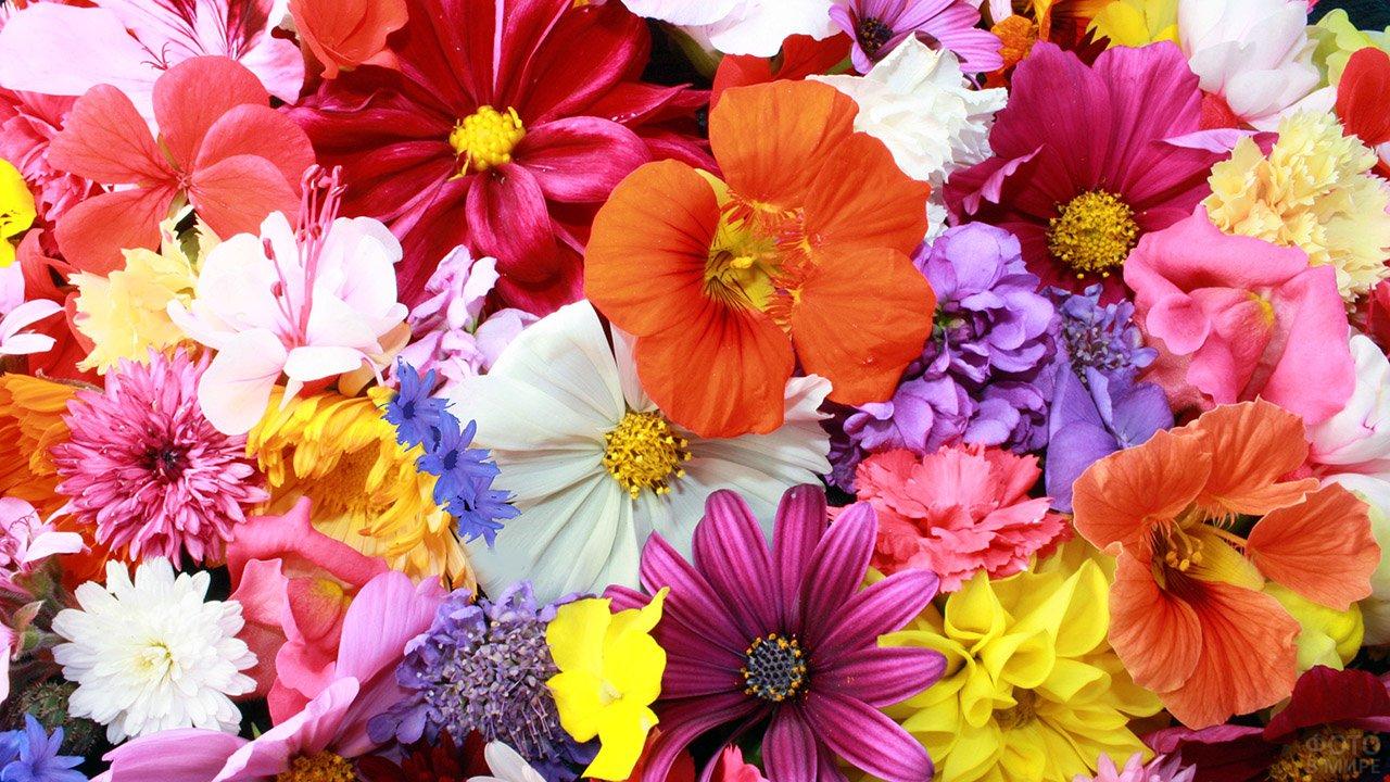 Летний букет из садовых цветов разных сортов