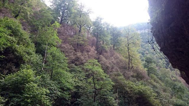 Лесистый склон в Гуамском ущелье