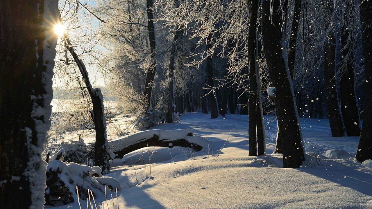 Лучи утреннего солнца пробиваются в зимний лес
