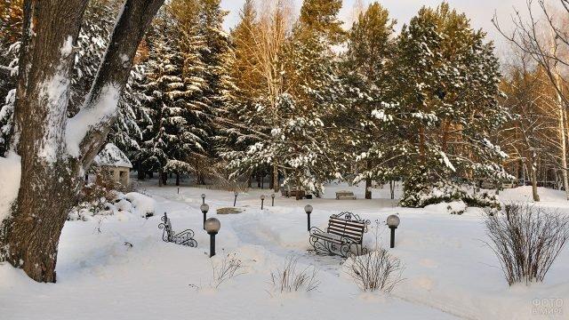 Раннее утро в зимнем парке