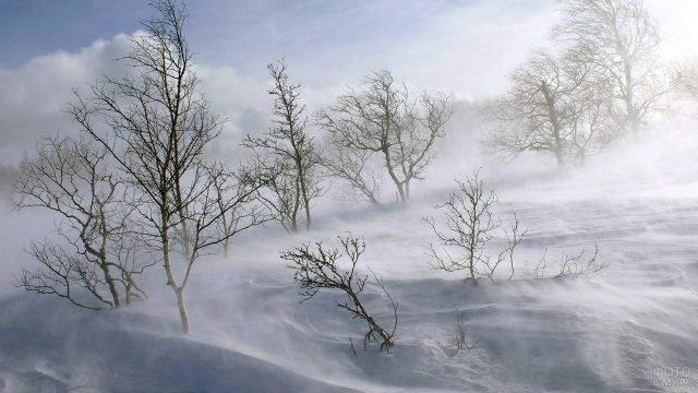 Снежная позёмка зимним утром в поле