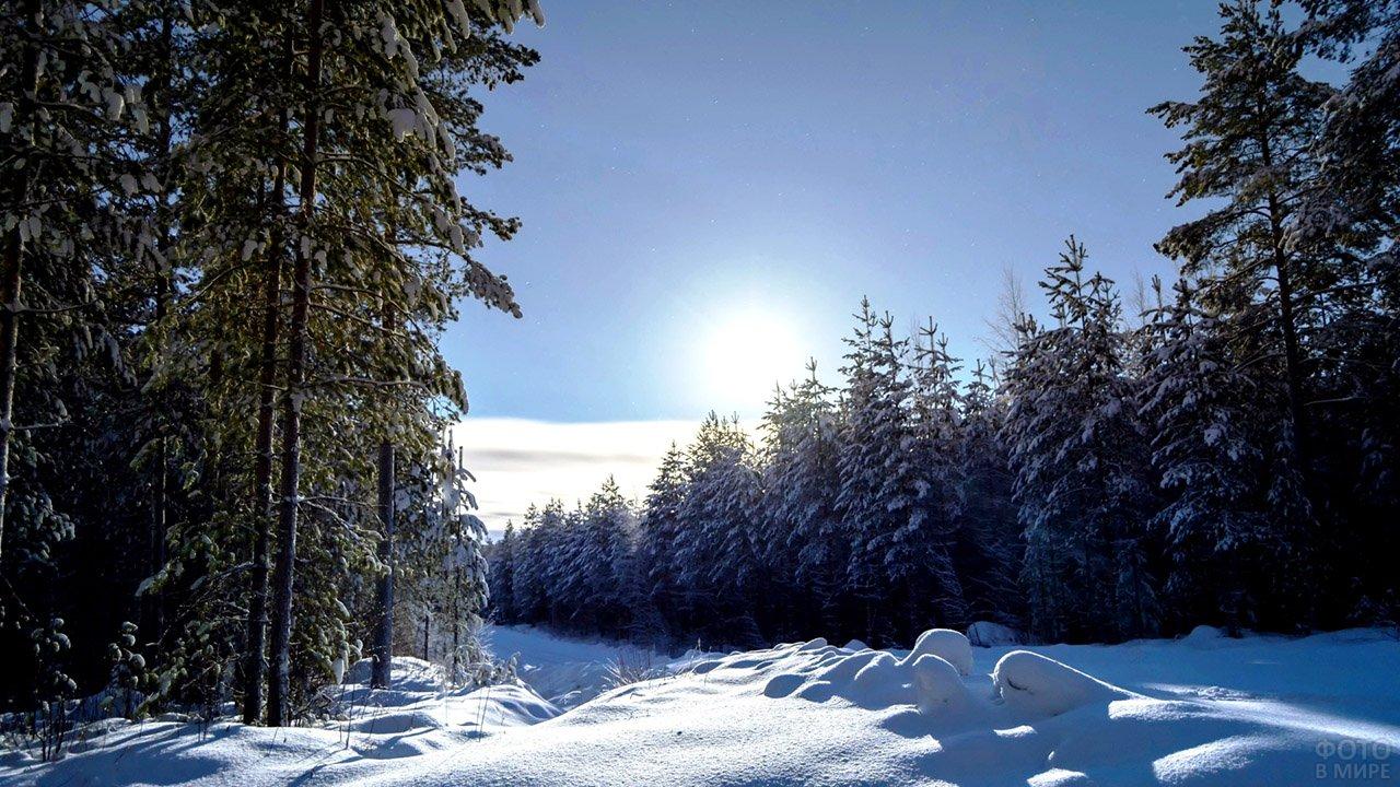 Утреннее солнце над зимним лесом