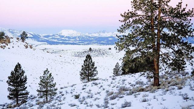 Утренний пейзаж в зимних горах с молодыми соснами на первом плане