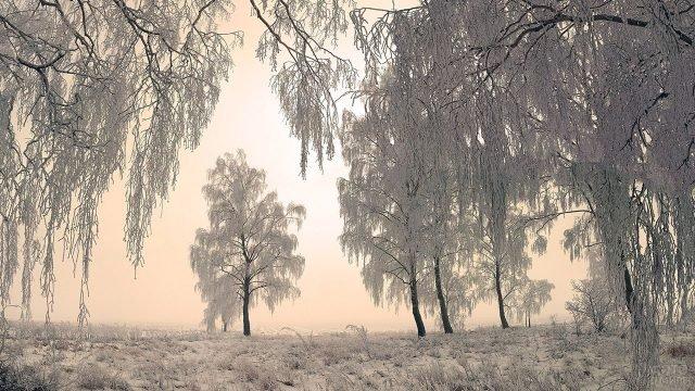 Утро в зимнем лесу, оттепель