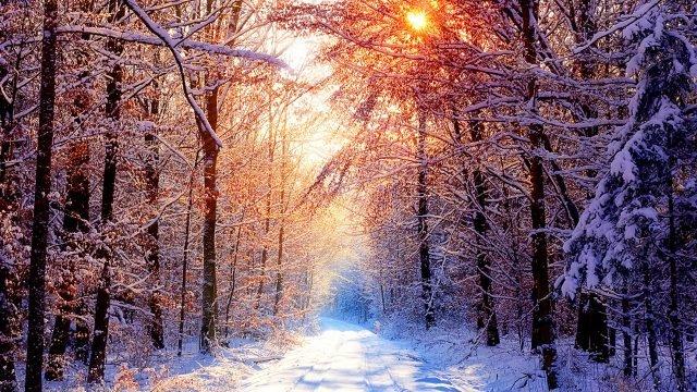 Живописная дорога в утреннем зимнем лесу