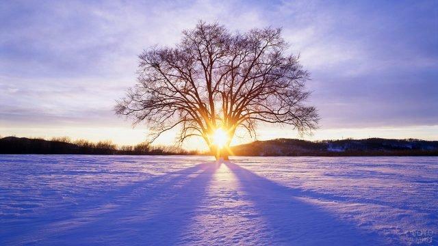 Зимнее солнце пробивается сквозь силуэт дерева в заснеженном поле