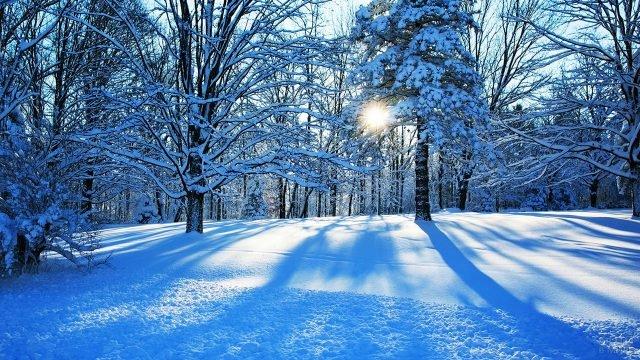 Зимнее утро в заснеженном лесу с голубыми тенями