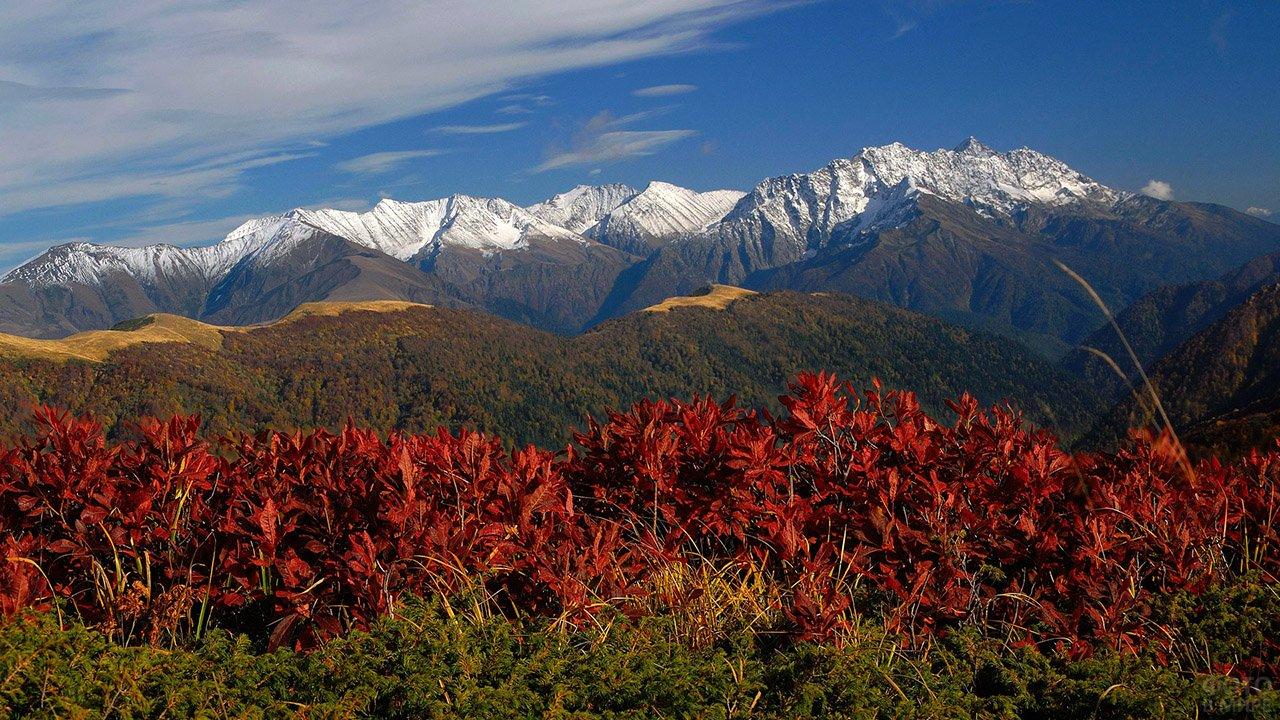 Цветущие горы Дагестана