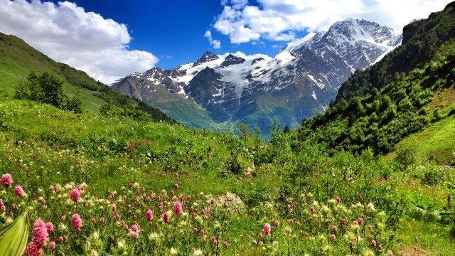 Цветущий луг в Национальном парке в Приэльбрусье