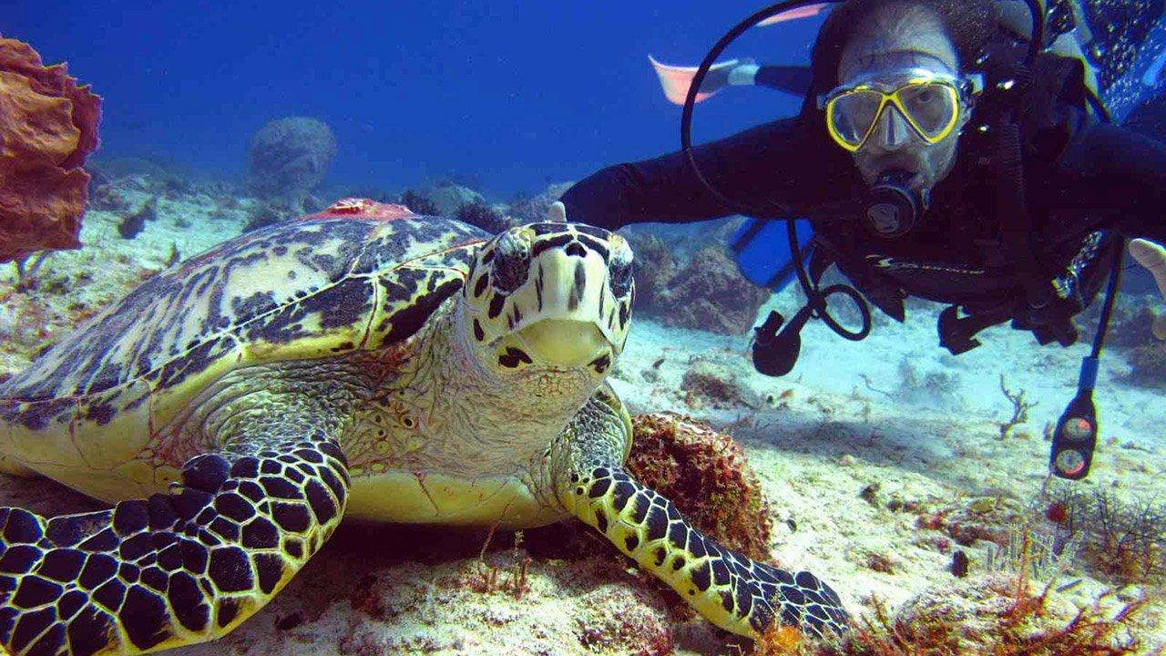 Дайвер с черепахой в национальном заповеднике Рас-Мохаммед