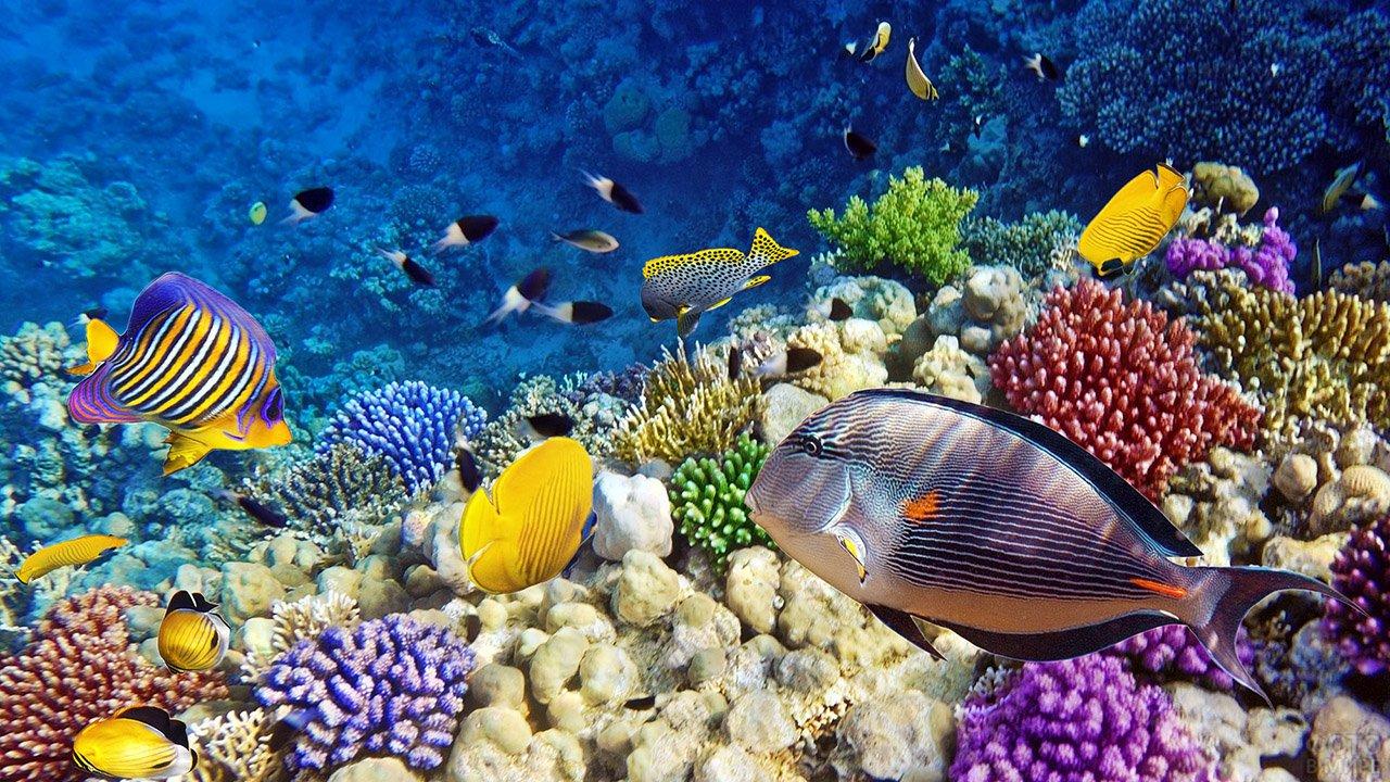 Рыбки и кораллы в заповеднике Рас-Мохаммед