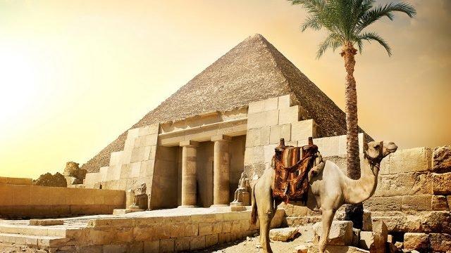 Верблюд возле пирамиды в Египте
