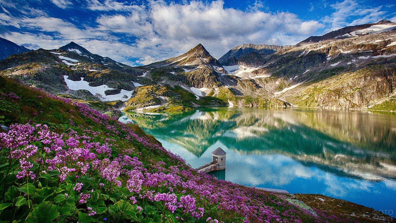 Цветущие берега озера в горах Кавказа Грузии