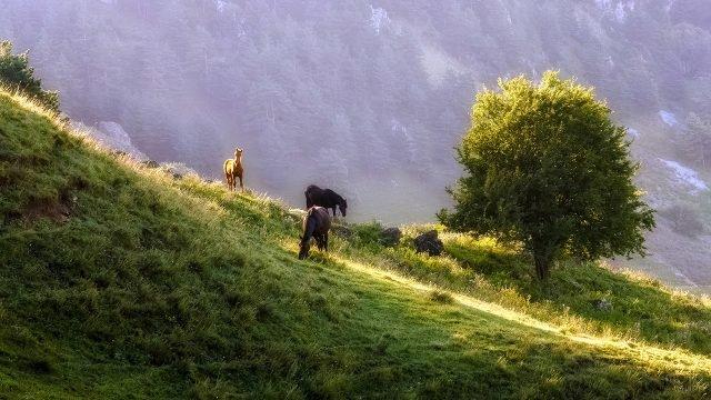 Лошади пасутся на склоне холма в Кавказских горах Ингушетии