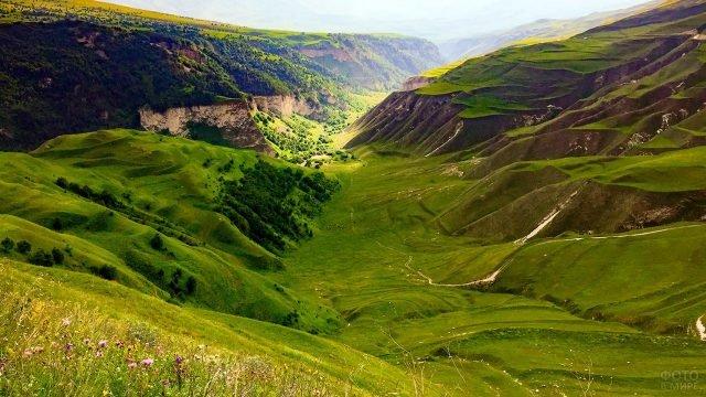 Зелёный пейзаж Кавказских гор летом в Чечне