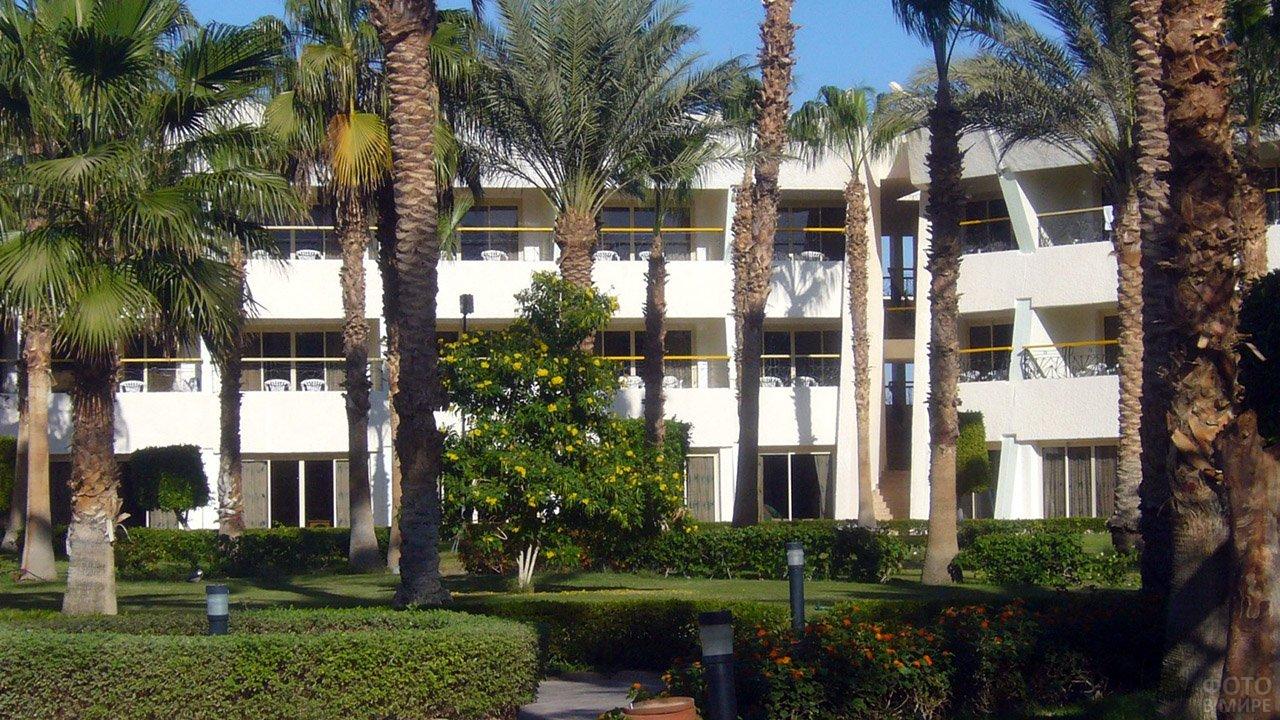 Тенистые пальмы в парке пр отеле в Нувейбе