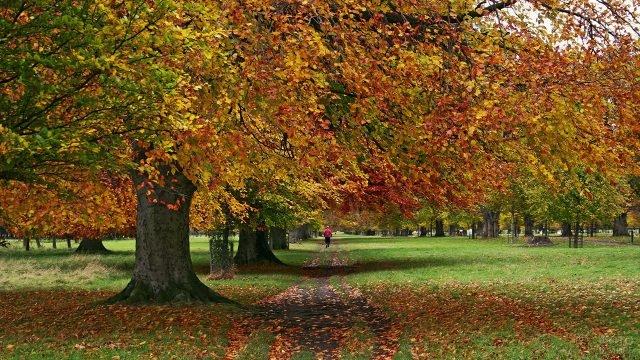Бегун в осеннем парке под разноцветными кронами деревьев