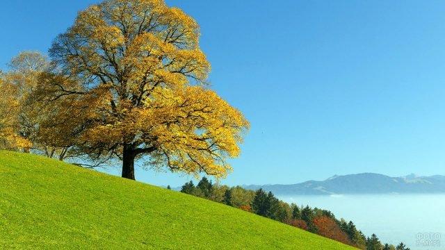 Дерево с золотой кроной на фоне утренней дымки в горах