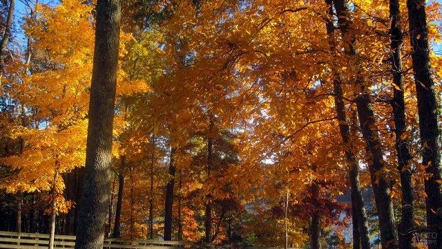 Яркие осенние кроны в солнечном лесу