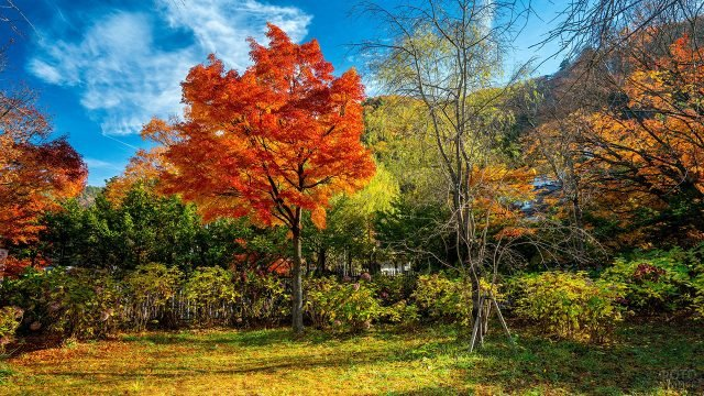 Ярко-оранжевое дерево на осеннем садовом участке