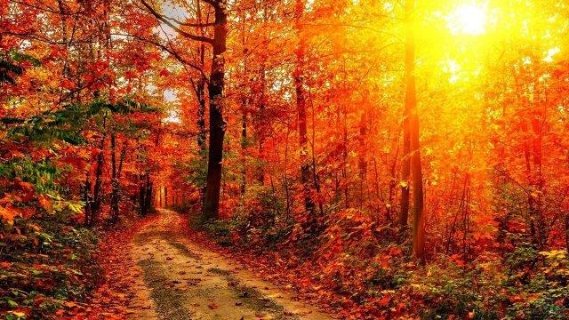 Яркое солнце пробивается сквозь оранжевые кроны осеннего леса