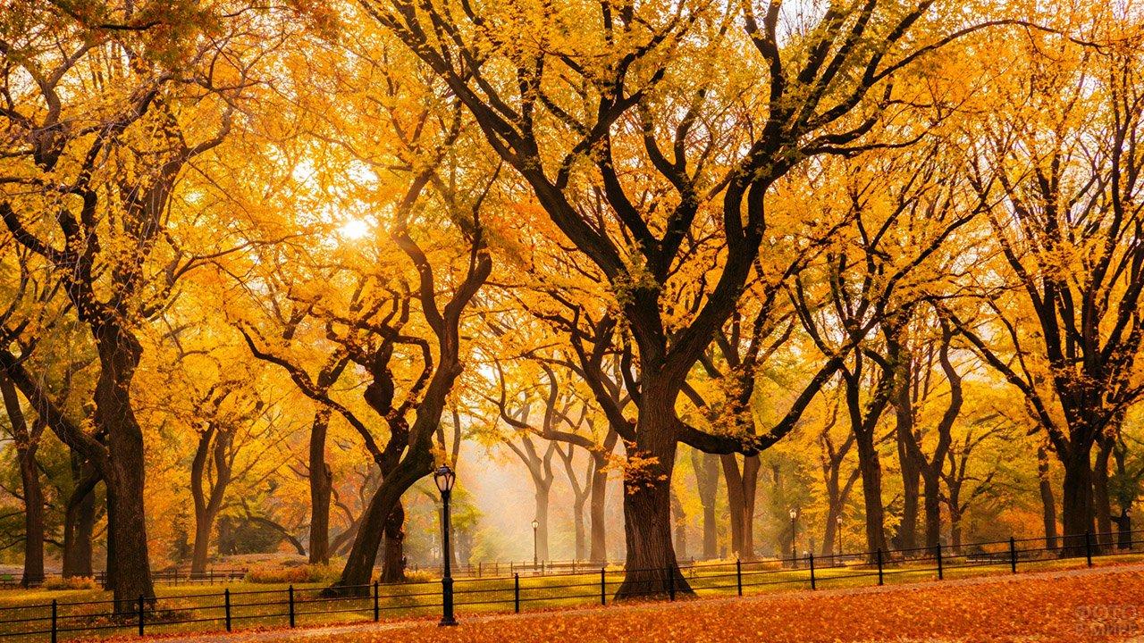 Контрасный осенний пейзаж в пожелтевшем парке