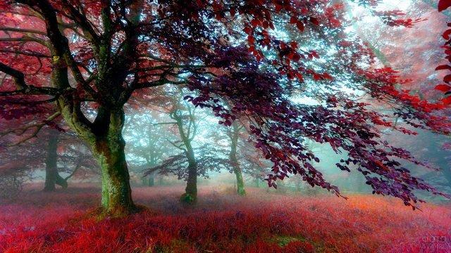 Красно-багряные кроны и трава в туманном парке