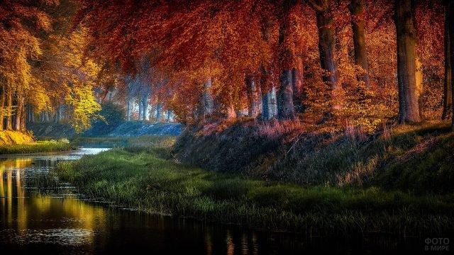 Лесной пейзаж с речкой и оранжевыми кронами деревьев у воды