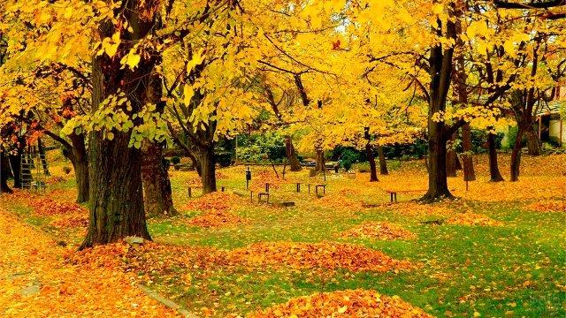 Листопад в осеннем парке в начале сентября