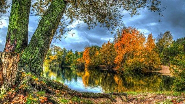 Осенние деревья на берегу лесного озера