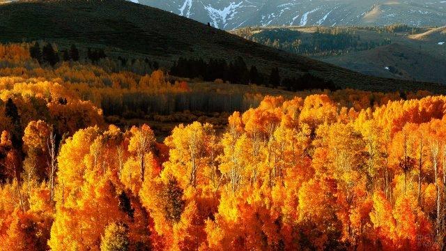 Осенняя тайга в лучах солнца с высоты птичьего полёта