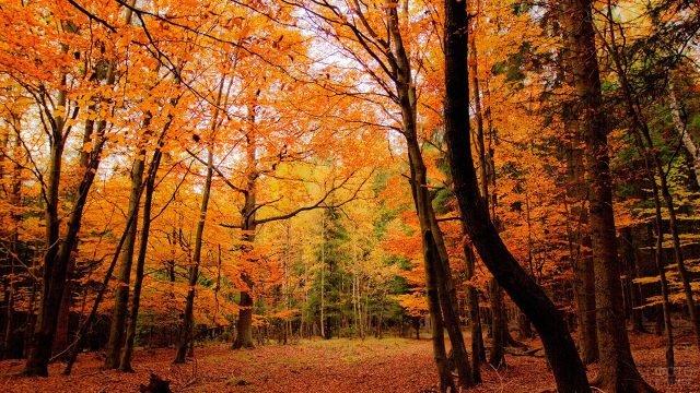 Пасмурный день в смешанном осеннем лесу