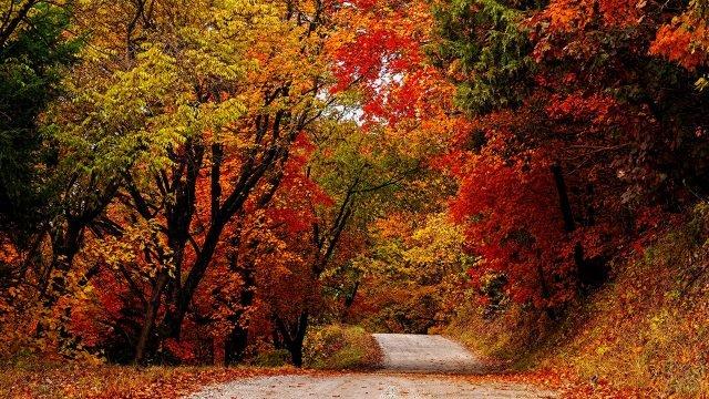 Пёстрые осенние деревья вдоль лесной дороги