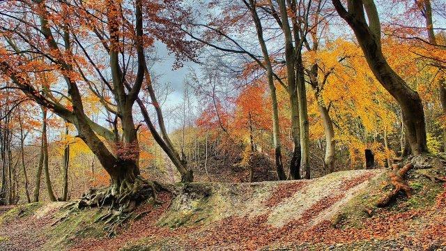 Пожелтевшие деревья на краю лесного оврага