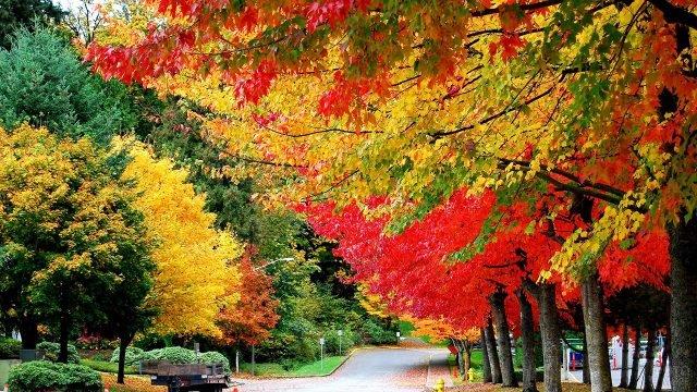 Разноцветные кроны деревьев в осенней аллее