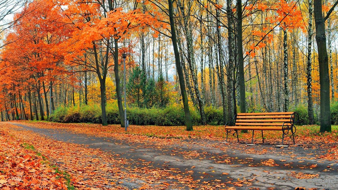 Скамейка под листопадом в осеннем парке