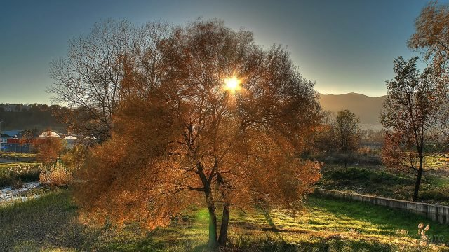 Солнце пробивается сквозь крону осеннего дерева в сельской местности