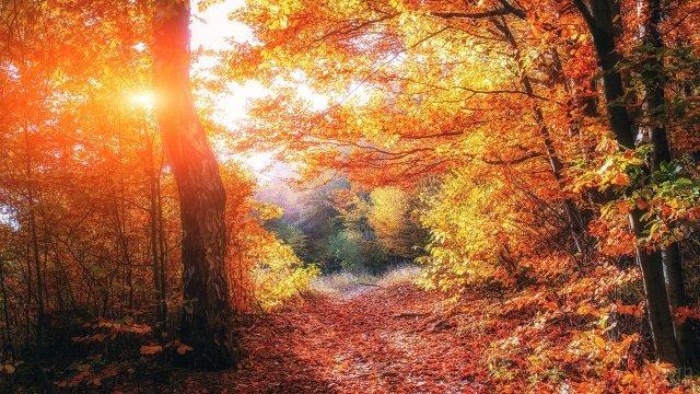 Солнечный лесной пейзаж в красках осени