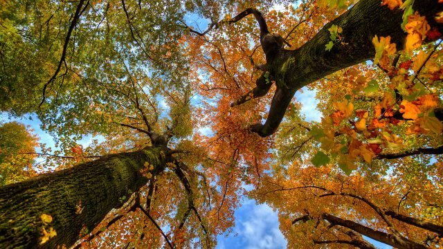 Уходящие в высь осенние деревья с пёстрыми кронами