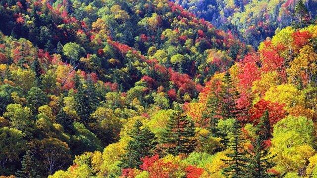 Верхушки деревьев пёстрого смешанного леса в начале осени